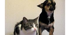 Restaurant Toulouse qui accepte les chiens et chats ( ® pxhere)